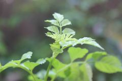 Young plant from nature Stock Images