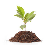 Young plant new life Royalty Free Stock Photo