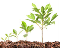 Young plant new life. Green sapling stock photography