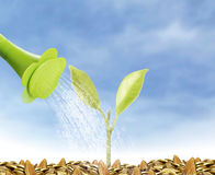 Young plant new life Stock Images