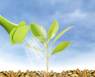 Young plant new life Royalty Free Stock Image