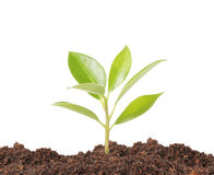 Young plant new life Stock Photo
