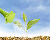 Young plant new life Royalty Free Stock Images