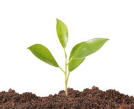 Young plant new life Royalty Free Stock Photography
