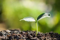 Young plant new life growing in garden. And sunlight royalty free stock photography