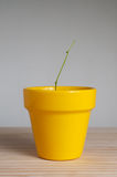 Young plant with no leaves. Royalty Free Stock Image