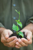 Young plant in old hands against green background Royalty Free Stock Photos