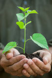 Young plant in old hands against green background Stock Photo