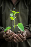 Young plant in old hands against green background Royalty Free Stock Photo