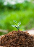 Young plant on old wood against spring natural background. Sprin Stock Image