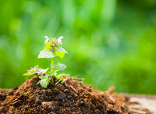 Young plant on old wood against spring natural background. Sprin Royalty Free Stock Images