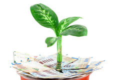 Young plant over sheqel Stock Photography
