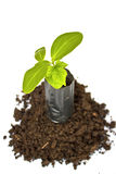 Young plant in Planting bag on  soil Stock Image