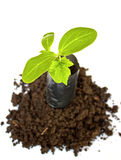 Young plant in Planting bag on  soil Royalty Free Stock Photo