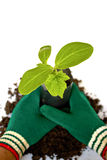 Young plant in Planting bag on  soil Royalty Free Stock Photos