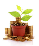Young plant in pot with coins isolated Stock Photography