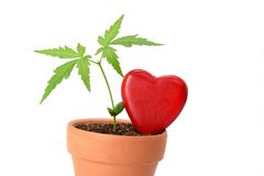 Young plant and red heart shape isolated on white Stock Photography