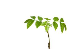 Young plant with roots Stock Images