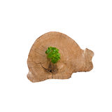 Young plant seedling growing from tree stump - regeneration and Royalty Free Stock Images