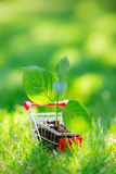 Young plant in shopping cart Stock Image