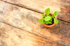 Young plant with small flowerpot Stock Images