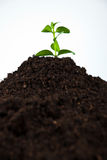Young plant in soil Royalty Free Stock Photos