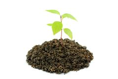 Young plant and soil. On white background Stock Photos