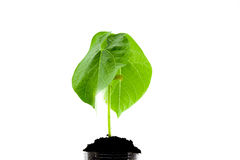 Young plant in a  soil Stock Photos