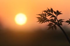 Young plant with sunset background Stock Photo