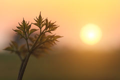 Young plant with sunset background Royalty Free Stock Image