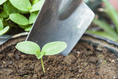 Young Plant with Trowel Royalty Free Stock Images