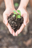 Young plant of vagetable with ground on hand Stock Image