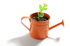 Young Plant in Watering Can Stock Photo