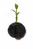 Young plant on white with copyspace showing gardening agricultur Stock Image