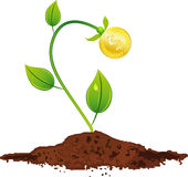 Young Plant With Golden Coins Royalty Free Stock Images