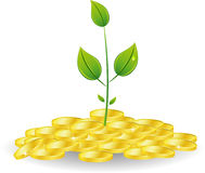 Young Plant With Golden Coins Stock Image