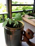 Young plant and wooden squirrel Royalty Free Stock Photo