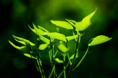 Young plantlet catching spring sun in the garden. stock photo
