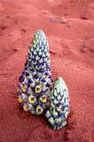 Young plants in desert. Spring in Wadi Rum desert ,Jordan Royalty Free Stock Photos