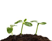 Young plants in earth, concept of new life Stock Photography