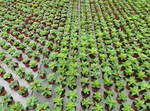 Young plants in a glasshouse Stock Photo