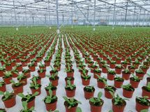 Young plants in a glasshouse Stock Images