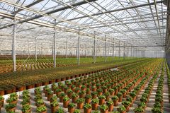 Young plants in greenhouse Stock Image
