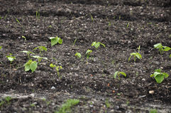 Young plants in ground Stock Photos