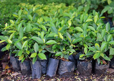 Young plants for growing in garden Stock Image