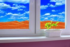 Young plants in pot. Sandy desert behind window of room royalty free stock photography
