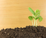 Young plants growing  on soil against wooden Stock Photos