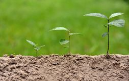 Agriculture environment on nature growing step concept stock photos