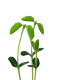 Young plants like a familiy stock image