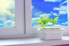 Young plants of oaks on window-sill and view to cloudy sky. Tree planting royalty free stock photos